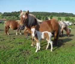 pony farm 4-star campsite