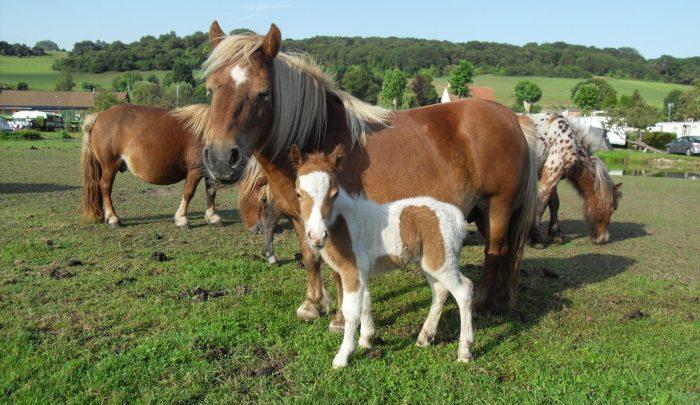 Pony Bauernhof Campingplatz 4 sterne